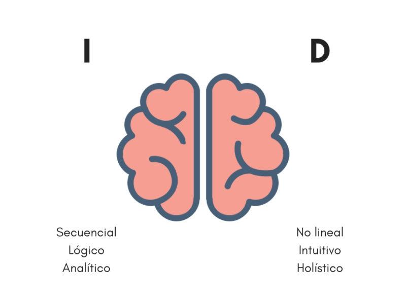 partes cerebro