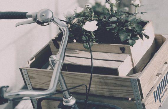 startup StartPoint ecológica