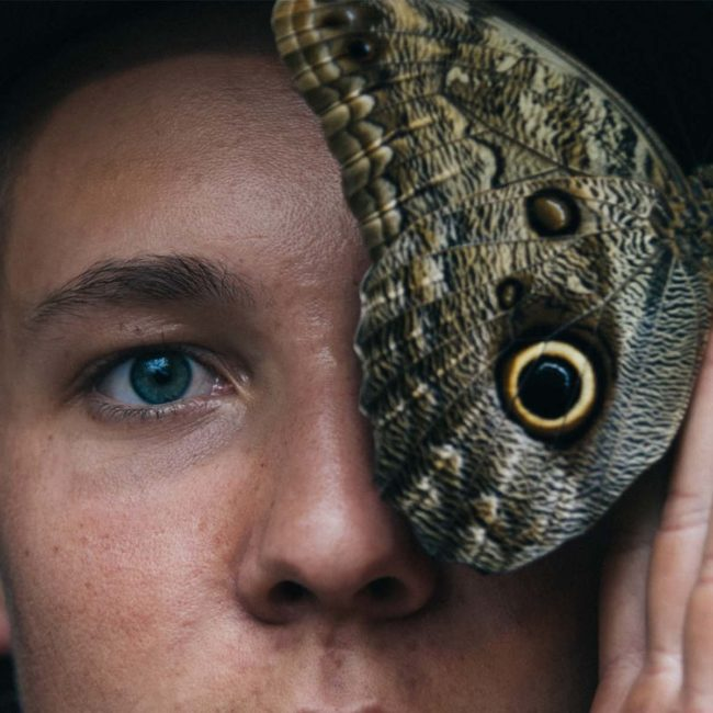 creatividad-crisis-mariposa