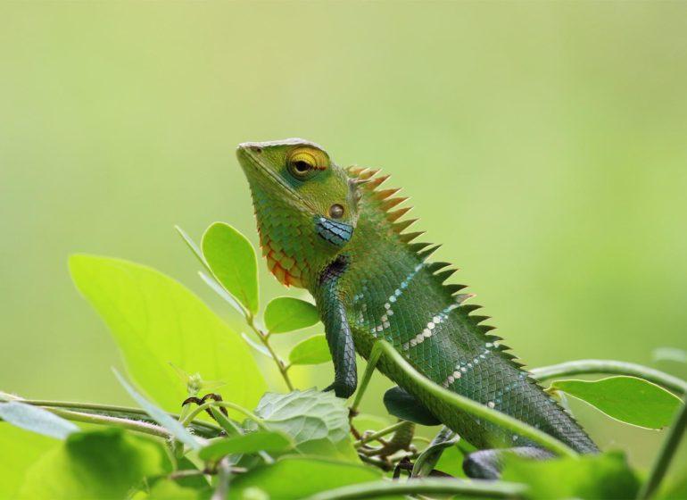 camaleon-entrecomp-habilidades